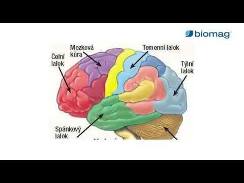 Visszér és agyi erek. A keringési zavarok okai, rizikófaktorai és típusai