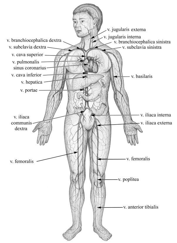 Élet a mélyvénás trombózis után
