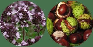 Phlebof vagy Phlebodia: Mi a jobb a varikózisra?