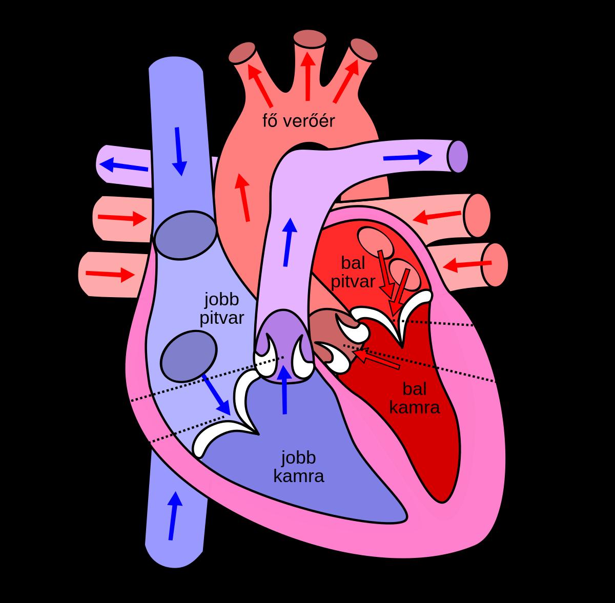 Visszér vagy trombózis: így deríthetjük ki