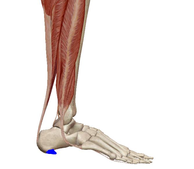 vastagbélgyulladással járó lábak