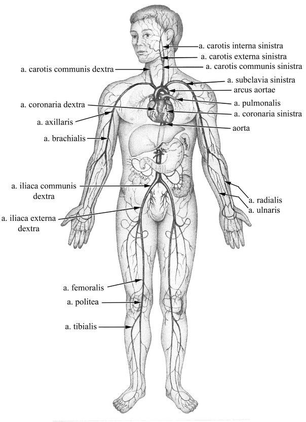 Visszér betegségek